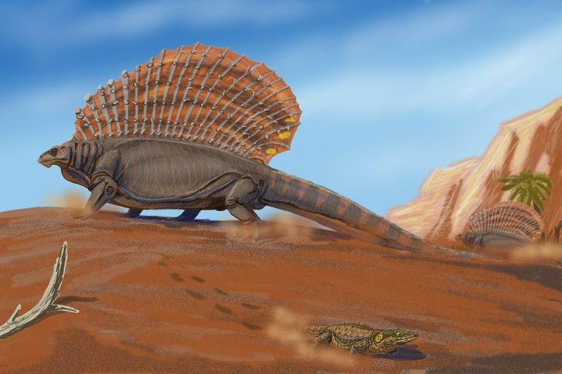 Edaphosaurus pogonias (Dimitry Bogdanov)