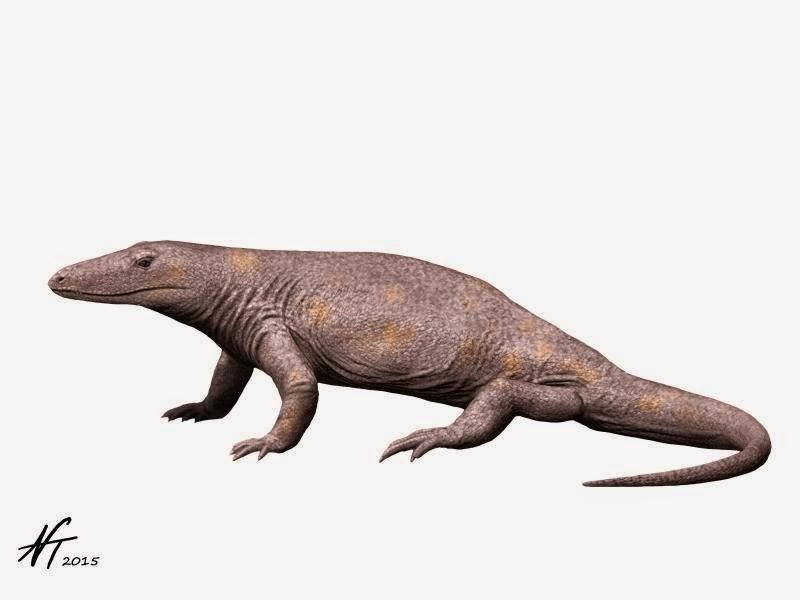 Varanosaurus acutirostris (© N. Tamura)