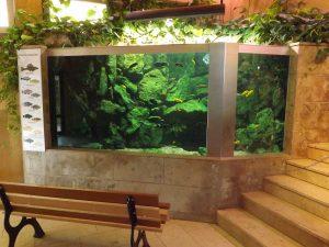 Aquarium im Giraffenhaus (Thürinr Zoopark)