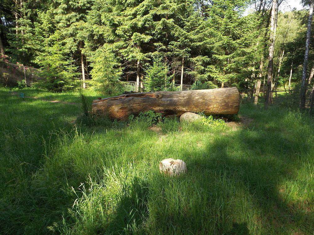 Fuchsanlage (Wildpark Schwarze Berge)