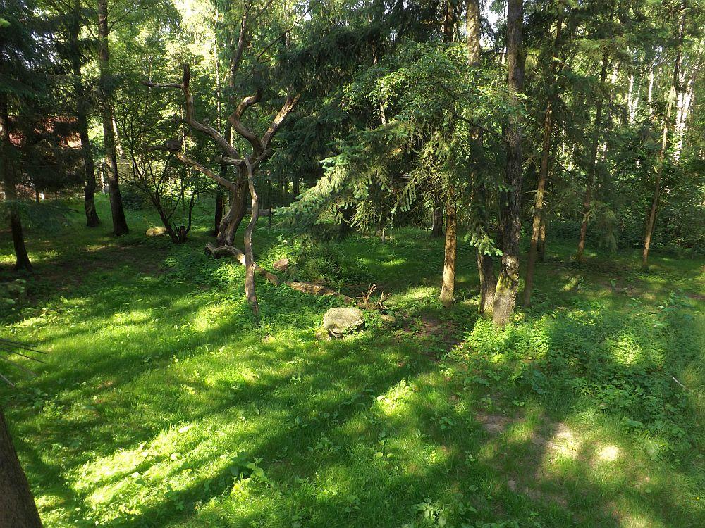 Luchsanlage (Wildpark Schwarze Berge)