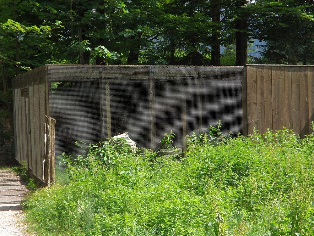 Mäusebussardvoliere (Cumberland-Wildpark Grünau)