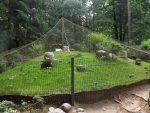 Meerschweinchenanlage (Wildpark Schwarze Berge)