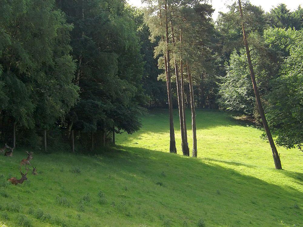 Rothirschanlage (Wildpark Schwarze Berge)