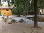 Teich (Inselzoo Altenburg)
