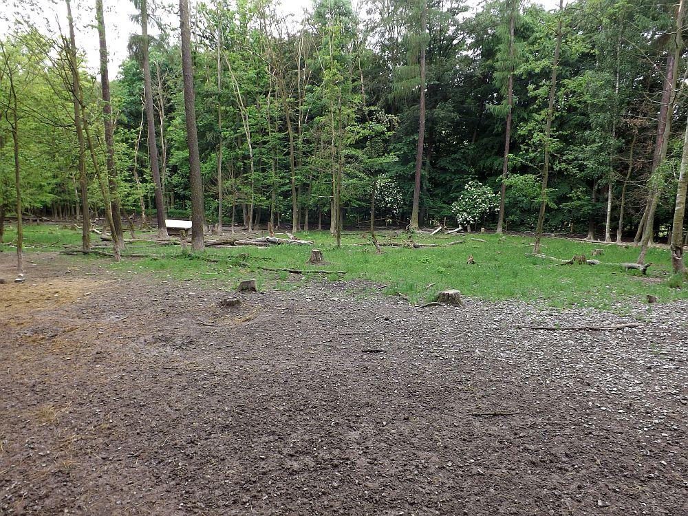 Wildschweinanlage (Wildpark Knüll)