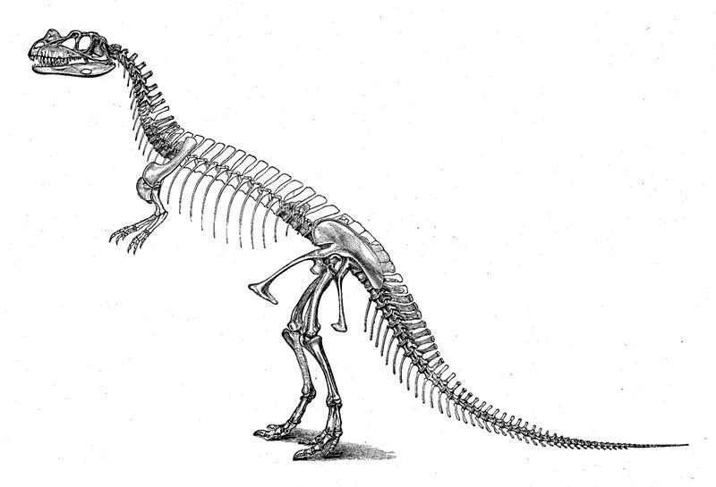 Historische Skelettrekonstruktion von Ceratosaurus (Othniel Charles Marsh, 1892)