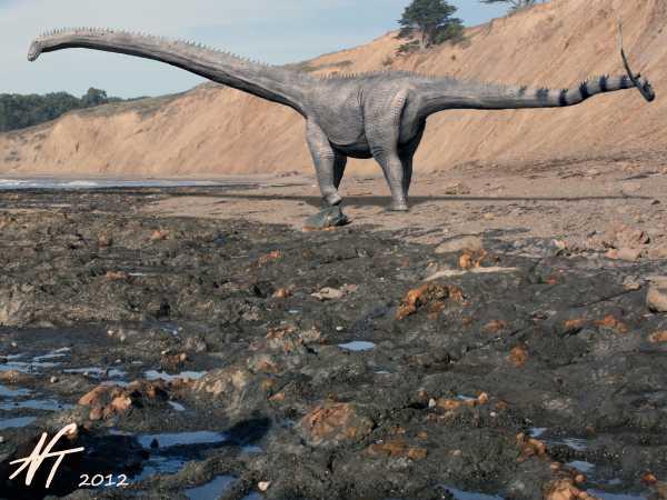 Barosaurus lentus (© N. Tamura)