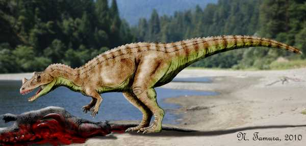 Ceratosaurus nasicornis (© N. Tamura)