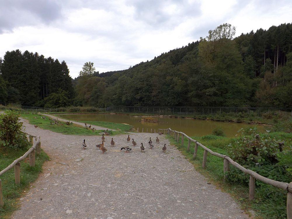 Berberaffenanlage (Affen- und Vogelpark Eckenhagen)
