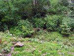 Fuchsanlage (Wildpark Knüll)