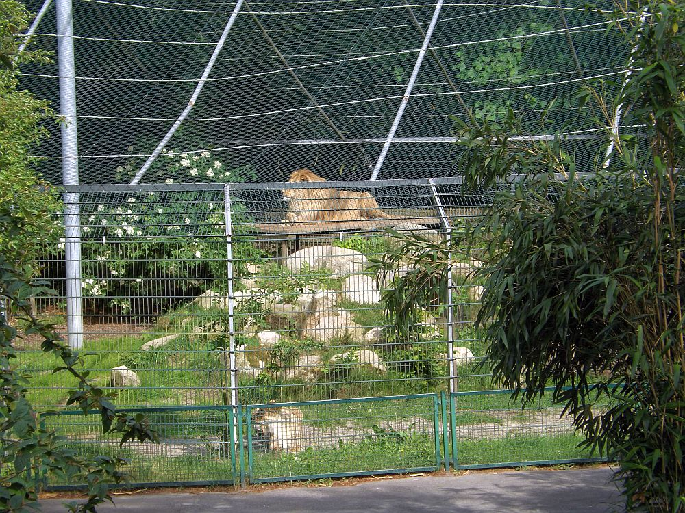 Löwenanlage (Zoo in der Wingst)