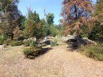 Luchsanlage (Wildpark Bad Mergentheim)