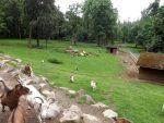 Streichelanlage (Wildpark Knüll)