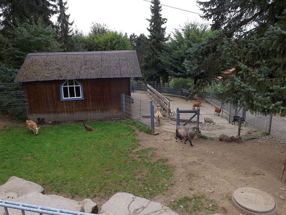 Streichelzoo (Affen- und Vogelpark Eckenhagen)