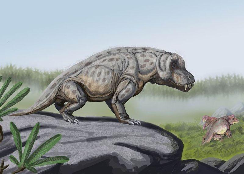 Anteosaurus magnificus (Dmitry Bogdanov)