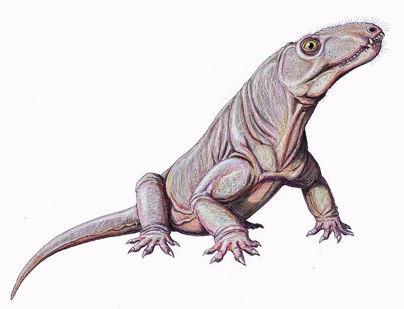 Archaeosyodon praeventor (Dmitry Bogdanov)