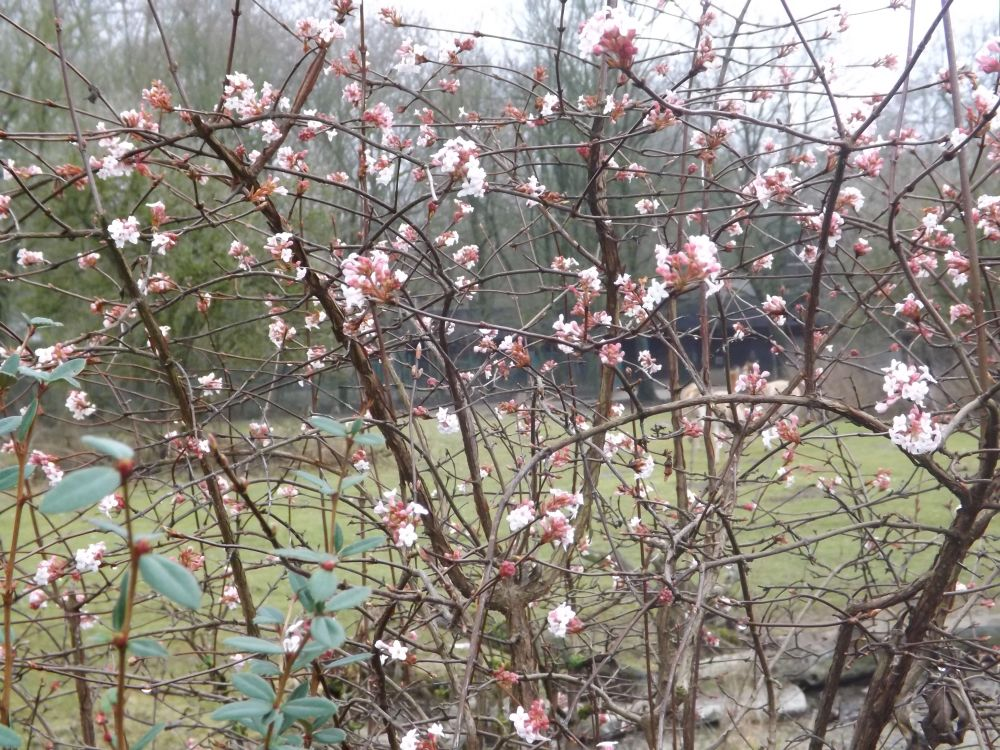 Frühling im Tierpark Hellabrunn