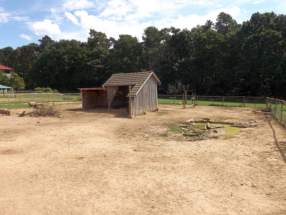 Hausschweinanlage (Tierpark Sommerhausen)