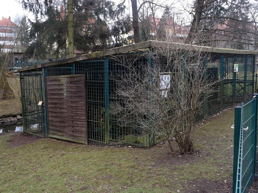 Waschbärenanlage (Tiergarten Freiberg)