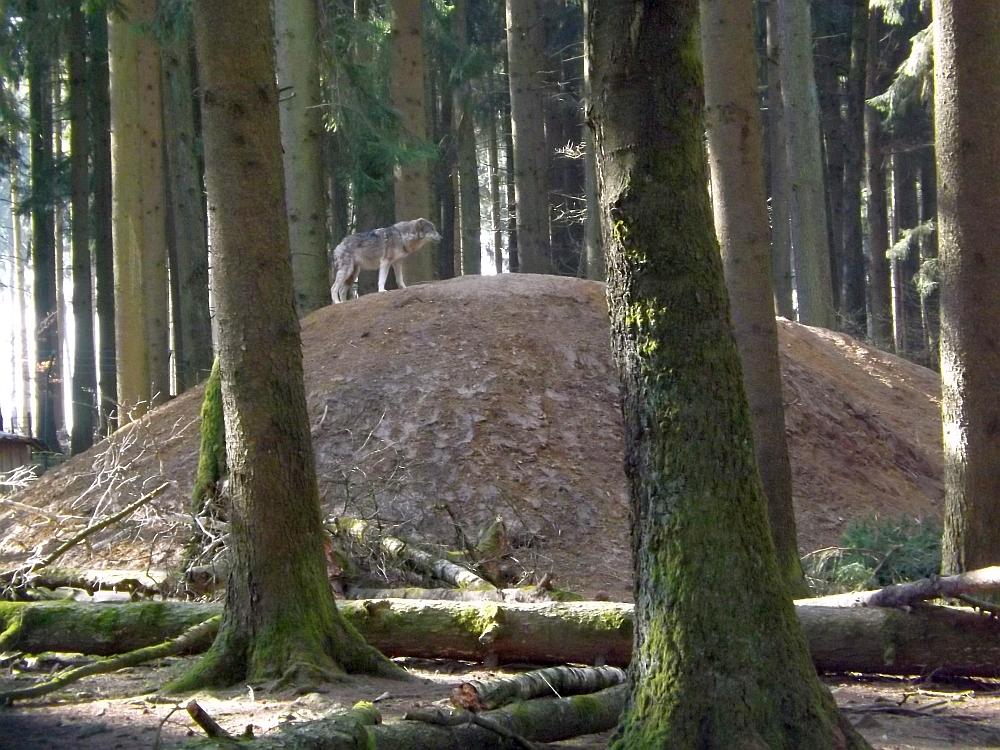 Wolfsanlage (Wildpark Poing)