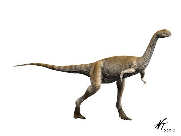 Elaphrosaurus bambergi (© N. Tamura)