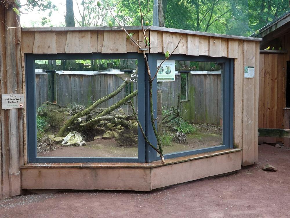 Außenanlage der Arguswarane (Tiergarten Worms)