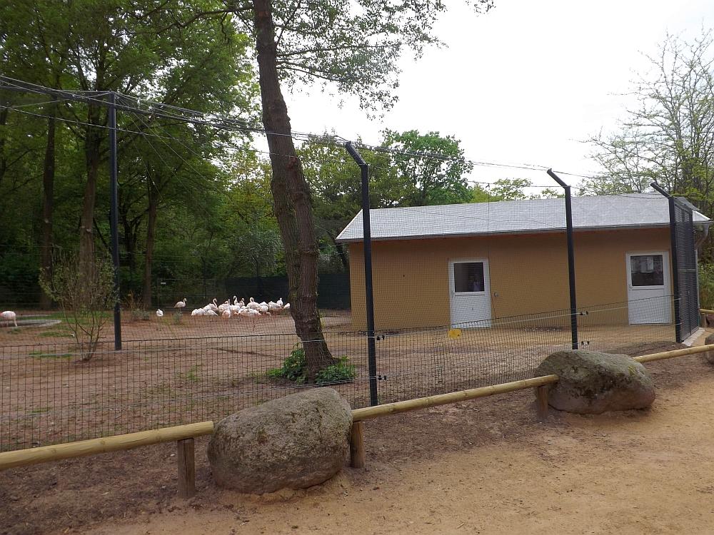 Flamingoanlage (Vivarium Darmstadt)