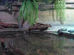 Anlage für Kaimane (Tierpark Bad Liebenstein)
