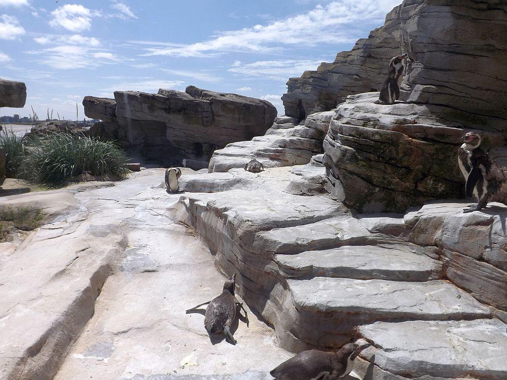 Pinguinanlage (Zoo am Meer)