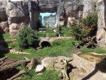 Polarfuchsanlage (Zoo am Meer)