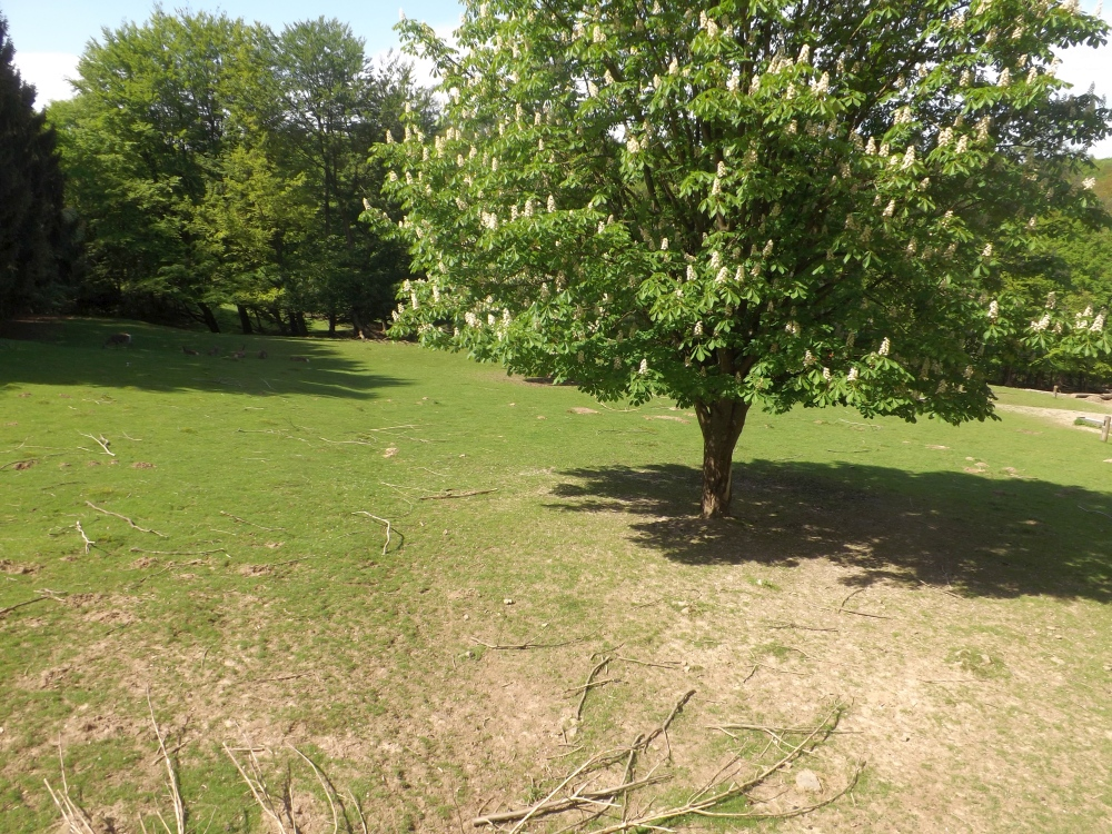 Rothirschwiese (Wildpark Haibach)