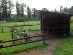 Anlage für Schafe (Tierpark Bad Liebenstein)