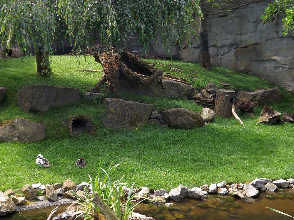 Schneehasenanlage (Zoo am Meer)