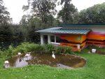Anlage für Zwergflamingos (Tierpark Bad Liebenstein)